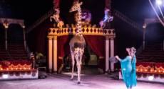 Circo Darix Togni a Palazzolo Sull-Oglio