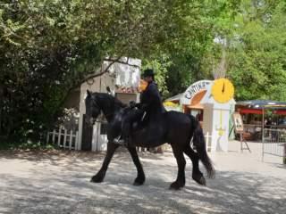IL FANTASTICO MONDO DEL FANTASTICO 6 OTTOBRE – La grande Zeta di Zorro e il ritorno di Mascia e Orso!