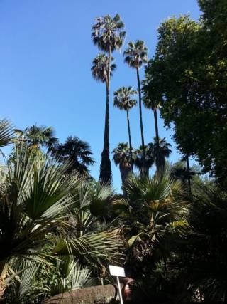 Le Meraviglie dell'Orto Botanico di Roma