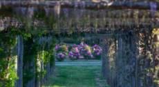 Sognando Monet: luci, colori e sfumature delle peonie in fiore!