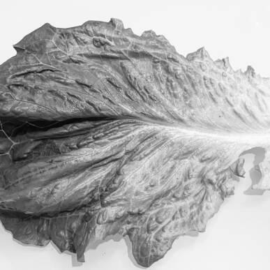 """Sognando Edward Weston: il gruppo F64, la passione con Tina Modotti e la fotografia """"pura""""! – NUOVA DATA"""