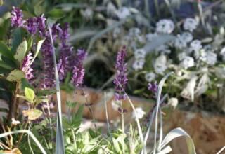 Giardininvaso | 14 maggio