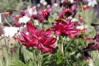 Giardininvaso | 16 maggio