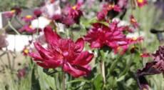 Giardininvaso | 15 maggio