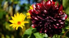 Giardininvaso | 2 ottobre