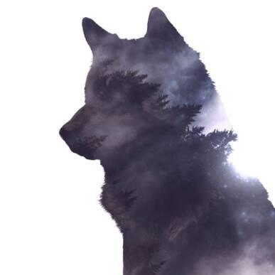 L'ombra del lupo @ Gran Paradiso dal VIvo