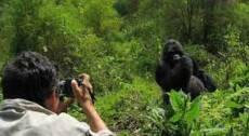 8-days Uganda – Chimps, Gorillas & Lions
